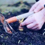 Growing The Survival Garden
