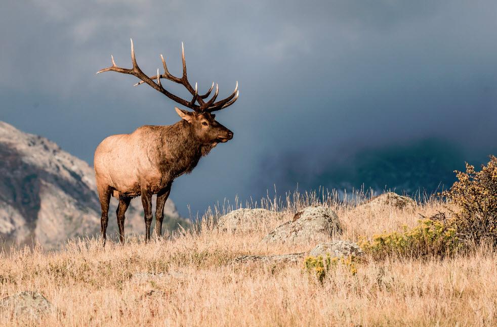 How to start elk hunting