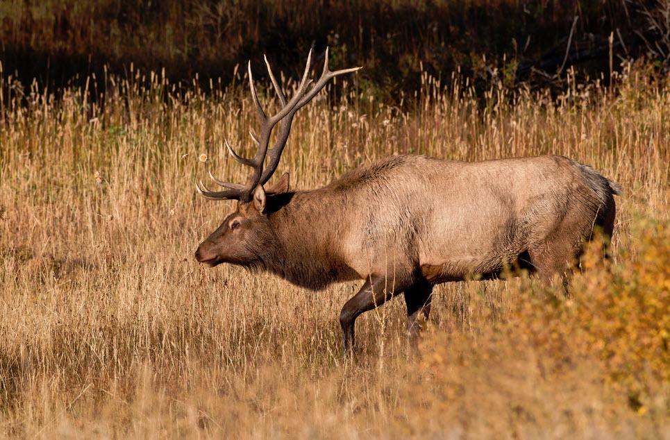 cost of elk hunting trip
