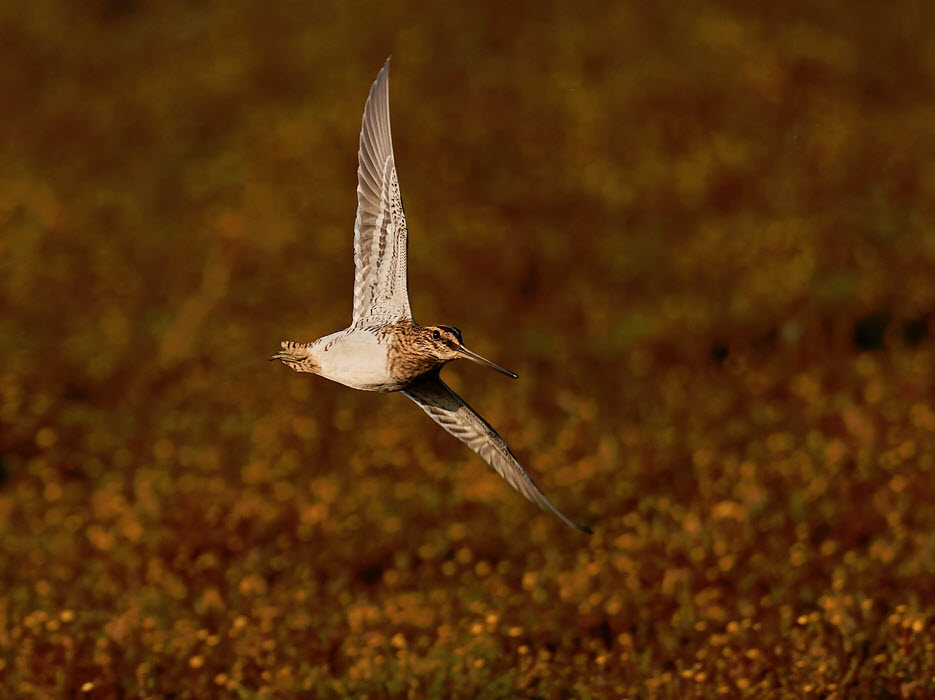 What You Need To Know Before Going On A Snipe Hunt