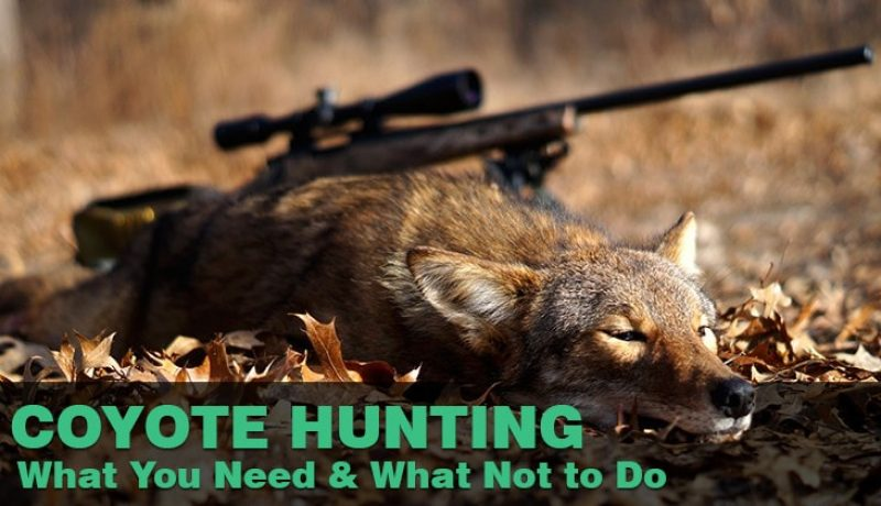 Coyote Hunting- What You Need & What Not to Do