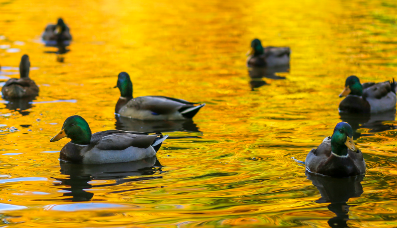 Best Places For Duck Hunting In Texas