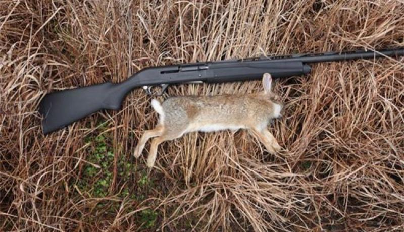 Rabbit Hunting- The Best Methods and Tips for Success