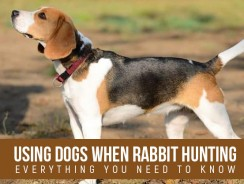 Using Dogs when Rabbit Hunting- Everything You Need to Know