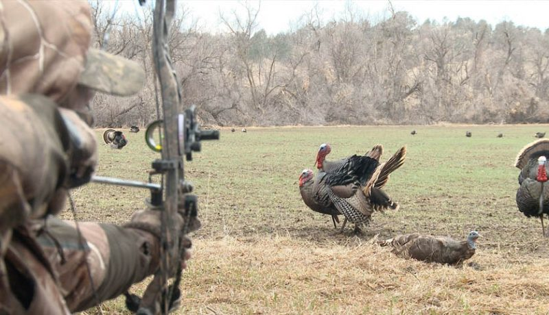 Bow hunting for Turkey