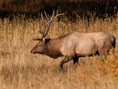 How much does an elk hunting trip cost?