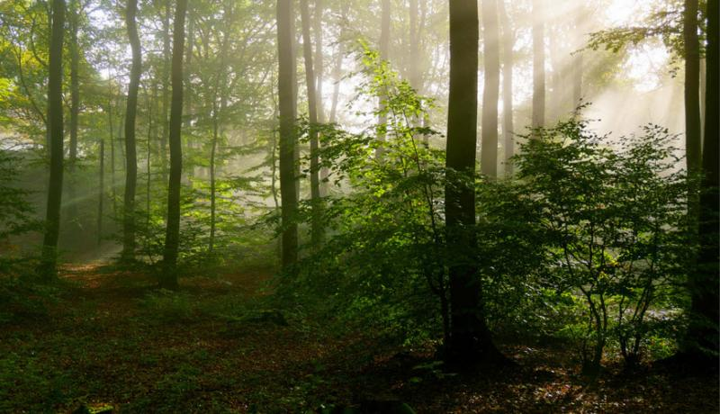 5 Signs That You Are In Love With The Wilderness