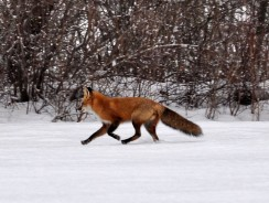 Hunting In The Dead Of Winter