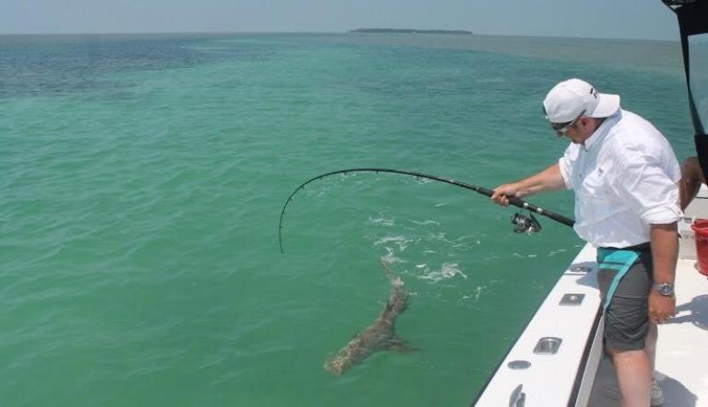 Shark Fishing: A Complete Beginner's Guide